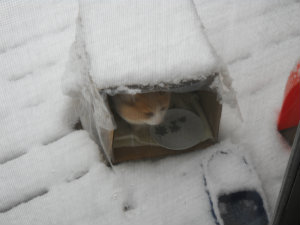 Marm in box on deck in snow