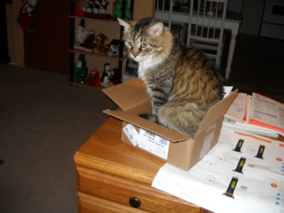 Sparky in small modem box