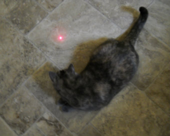 Holly and the red dot