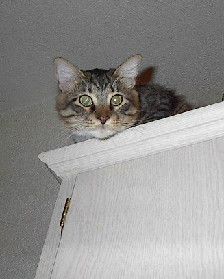 Sparky on top of cabinet