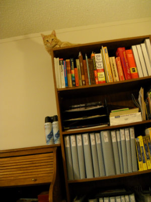 Riley on bookcase