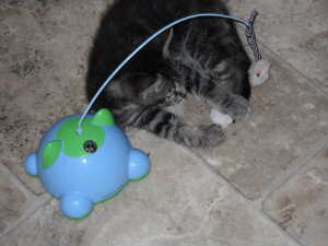 Mort with blue toy